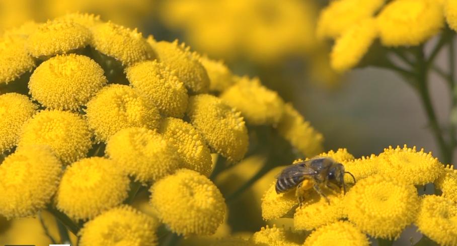 Citaten Over Bijen : Bijen en wespen deneerbeekvallei